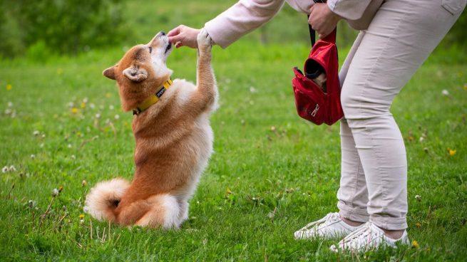 Enseñar al perro a obedecer