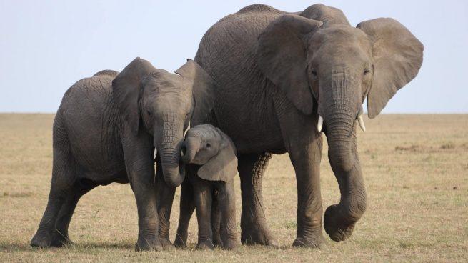 Frases de elefantes