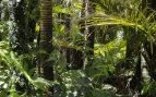 Bosque en Yucatán
