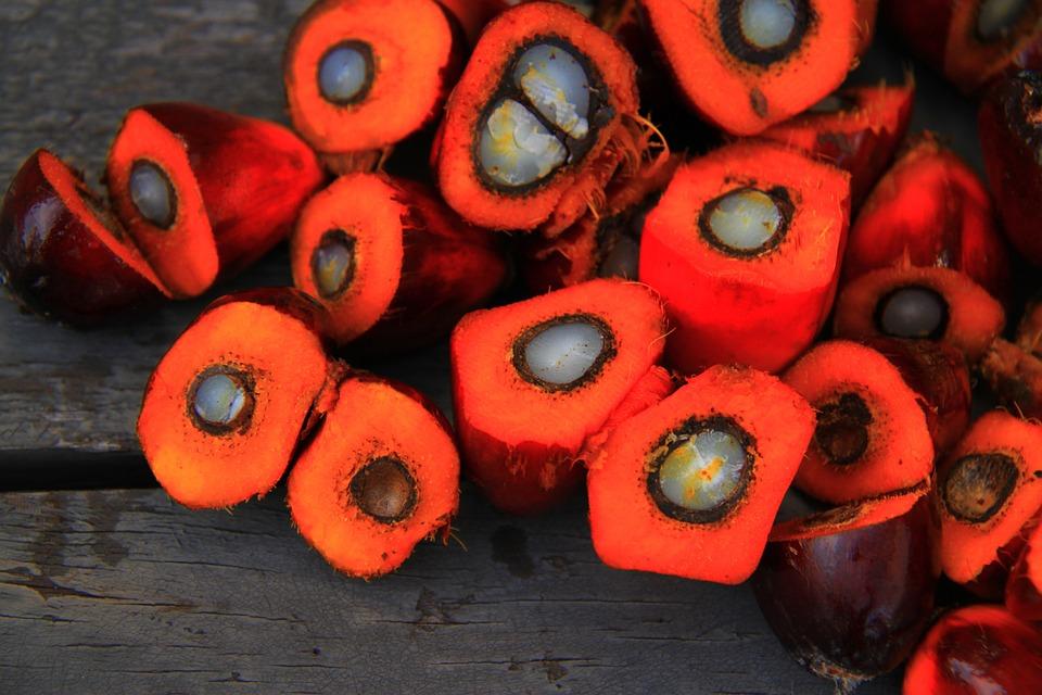 El aceite de palma. Todo lo que debes saber