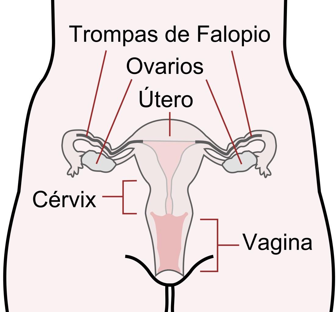Ovarios artificiales