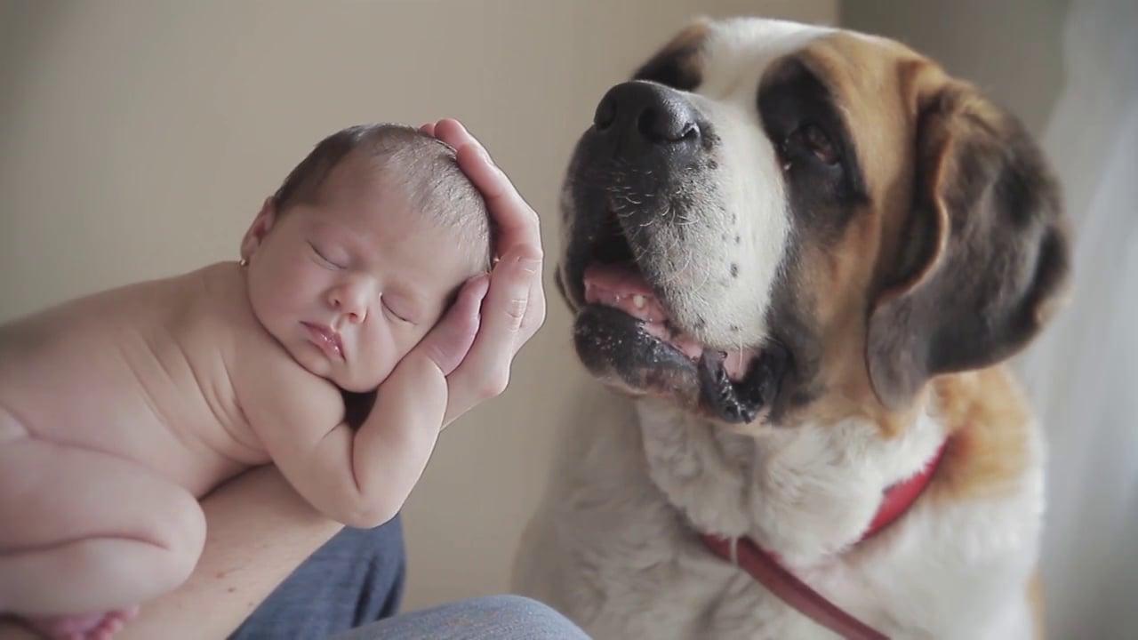 llegada del bebé