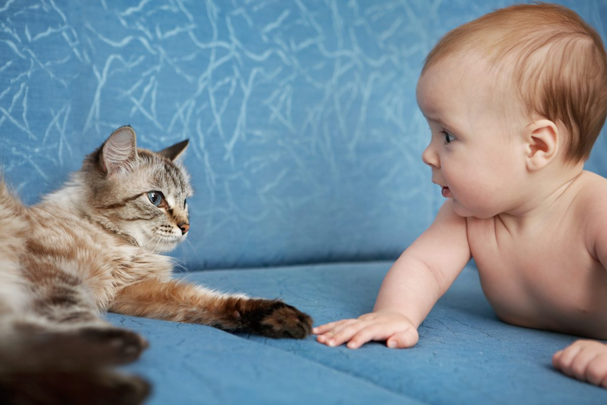 Hay que tomar medidas para que la llegada del bebé sea bien acogida por la mascota.