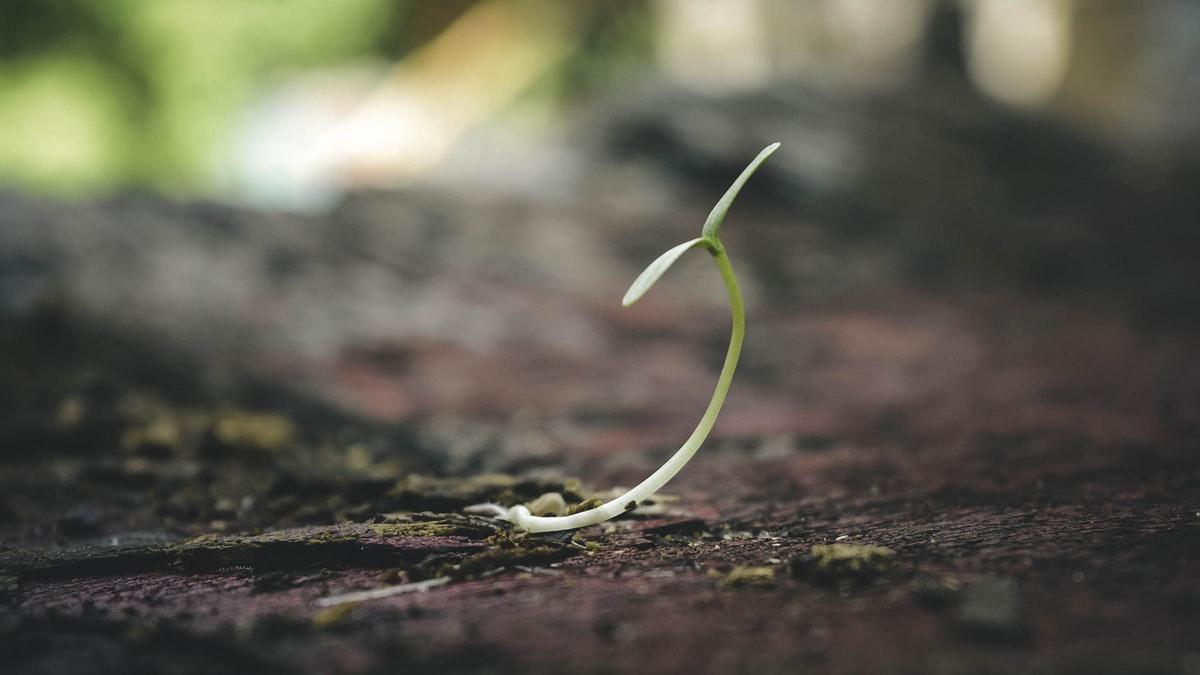 Paciencia y esfuerzo se aprenden al plantar semillas con los niños