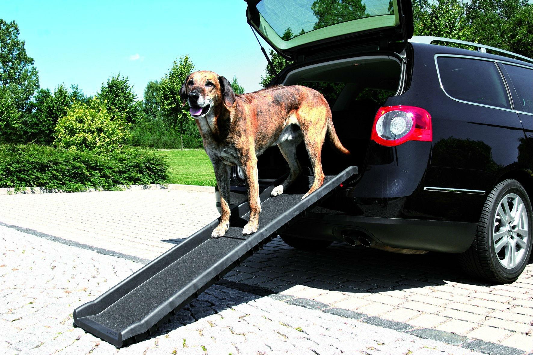 Rampa perro coche