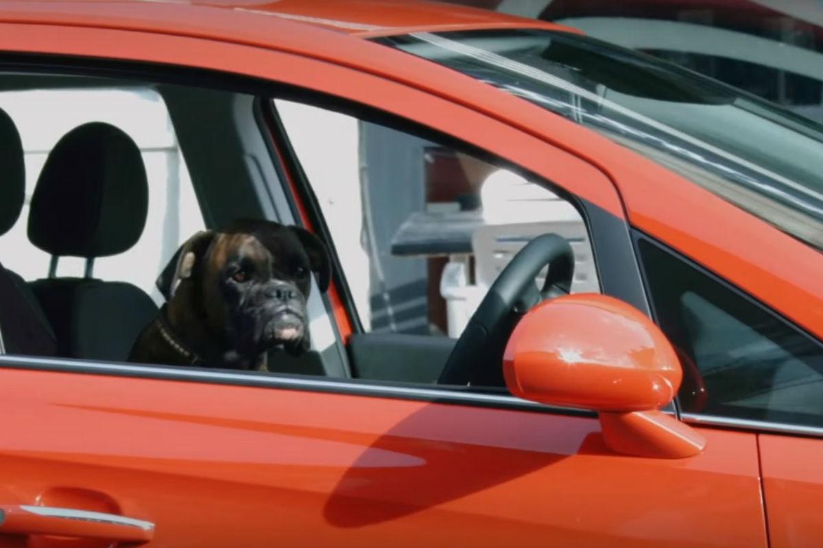 Perro aparcando
