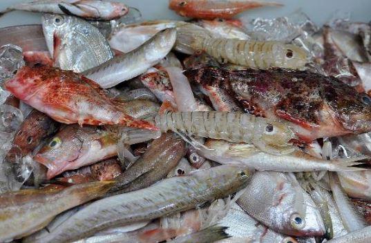 Morralla, para caldo de pescado