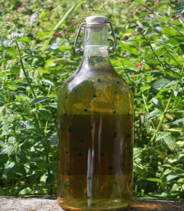 licor de menta casero