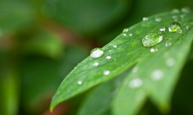 ambiental-humedad