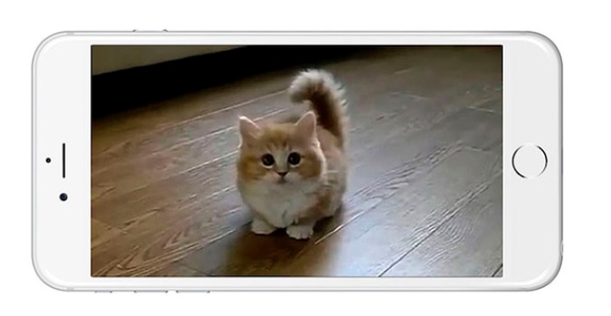cat-app