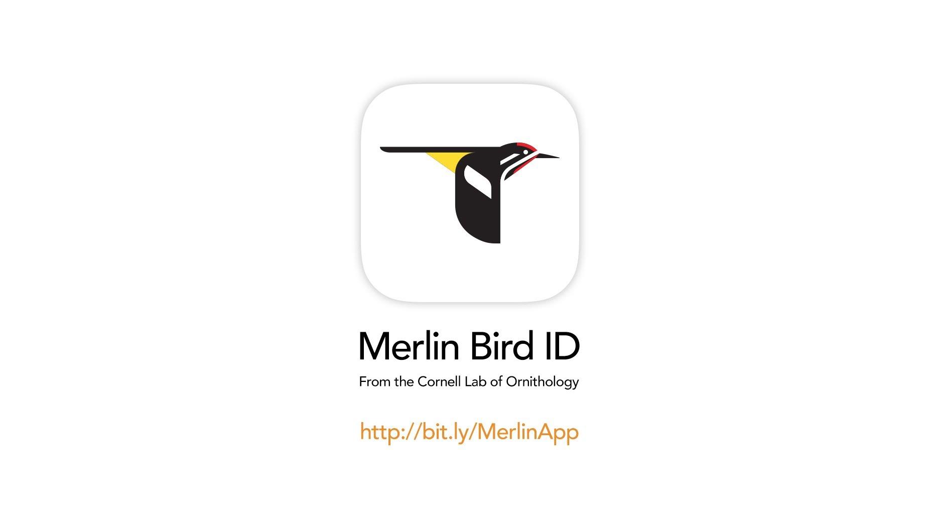merlin-app