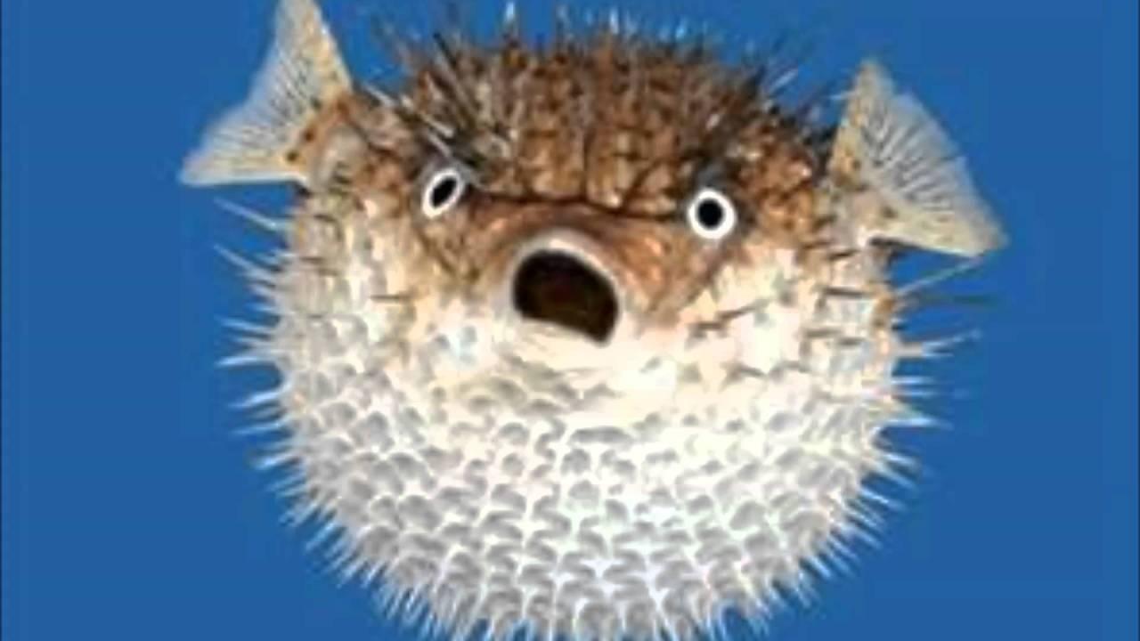 Estómago a prueba: pez globo