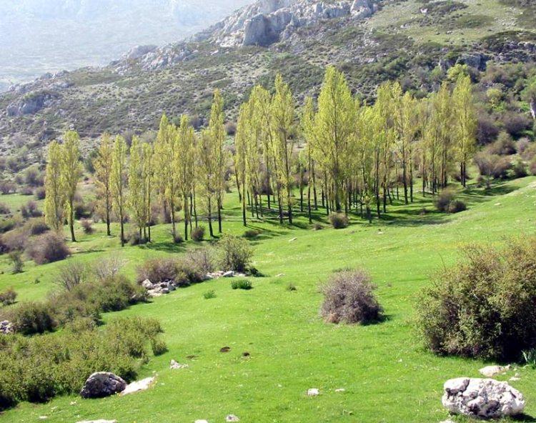 Parque_de_Sierra_Magina. Parques naturales.