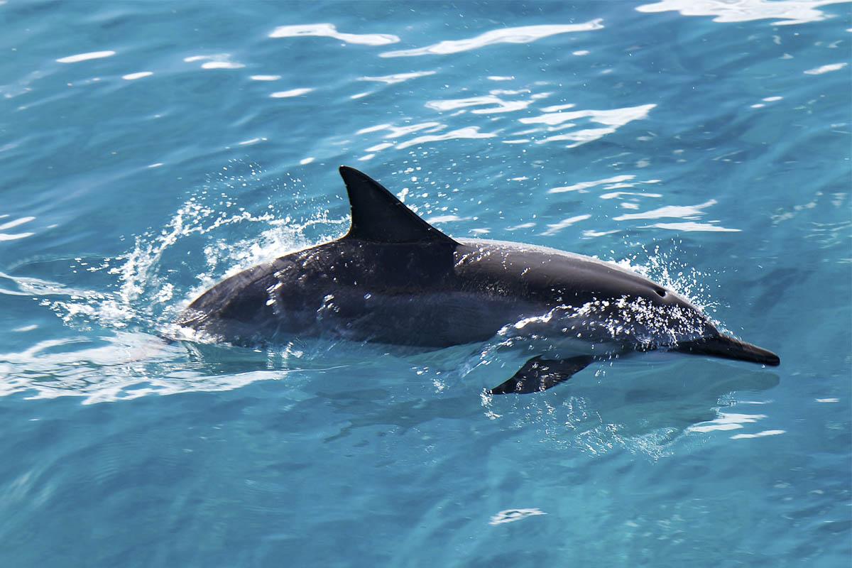 Por favor, ¡no molesten a los delfines!