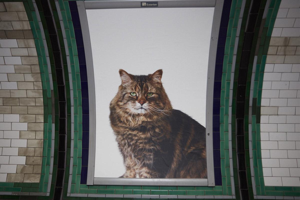 Los gatos invaden el metro de Londres