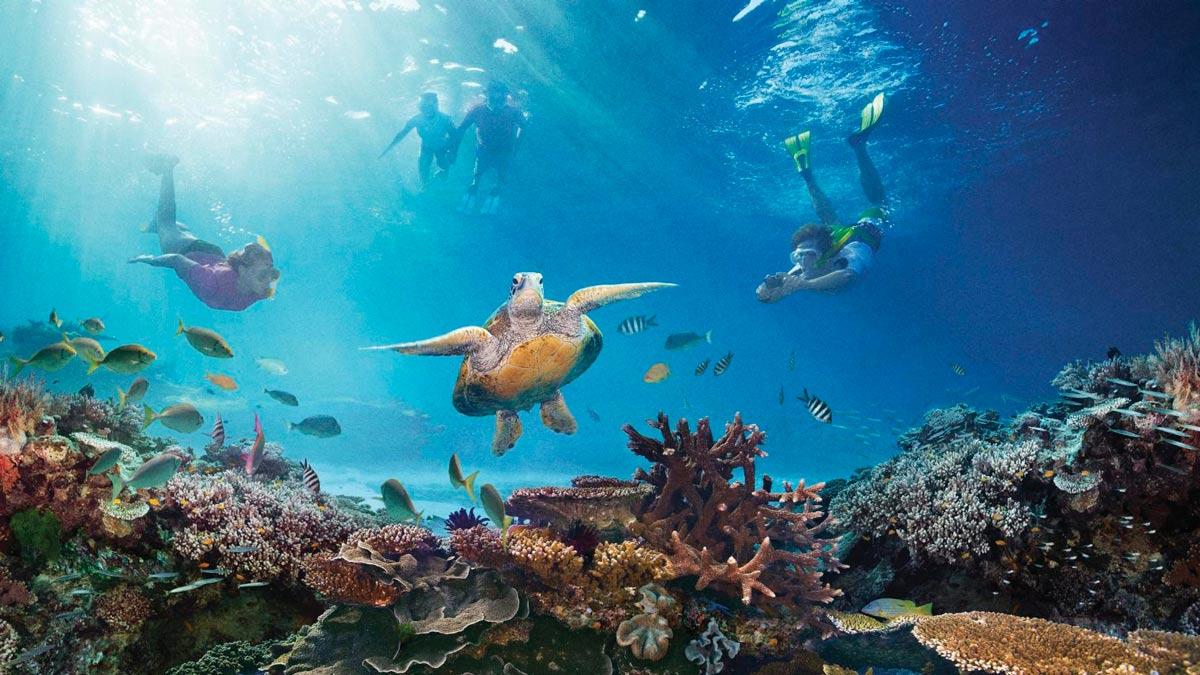 Los arrecifes de coral más visitados del mundo