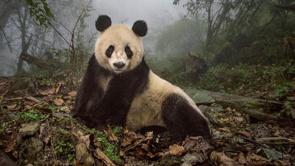 Fotografía por cortesía de National Geographic