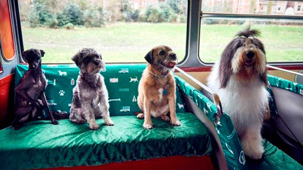 Londres estrena un autobús exclusivo para perros