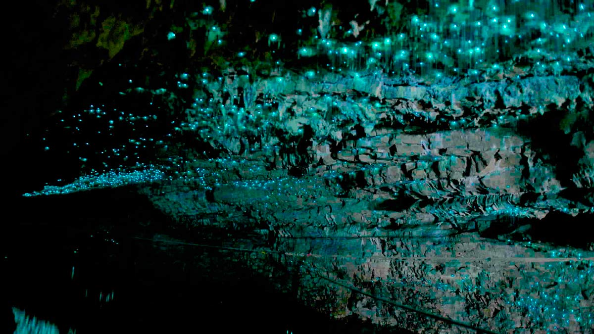 """Waitomo: la cueva de las """"estrellas"""""""