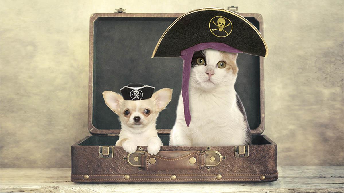 Sigue estas recomendaciones y podrás viajar con tu mascota en tren, coche o avión sin ningún problema