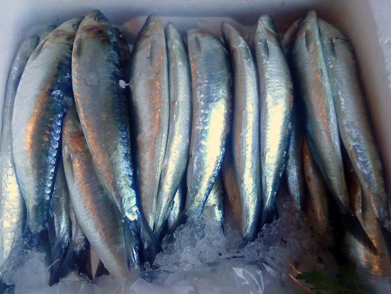 pescado-azul-sardinas