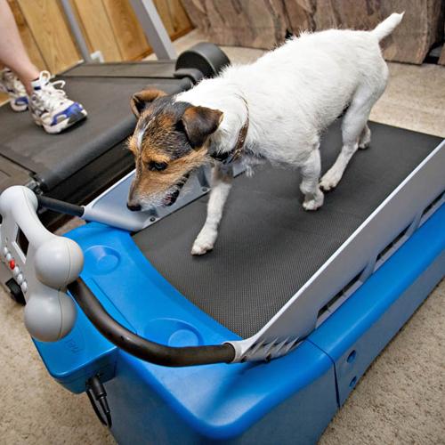 gimnasio-para-perros-