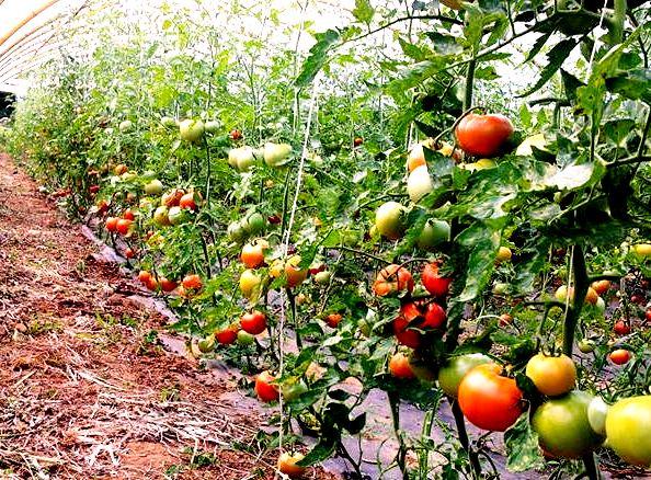 3 motivos por los que escoger alimentos ecológicos