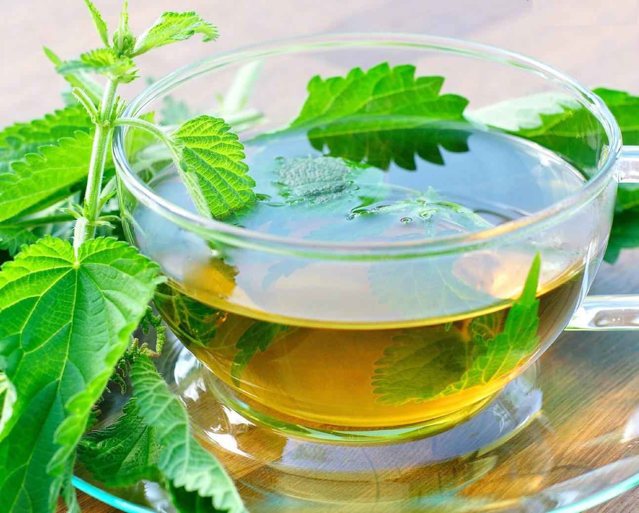 Cuáles son los beneficios para la salud del té de ortigas