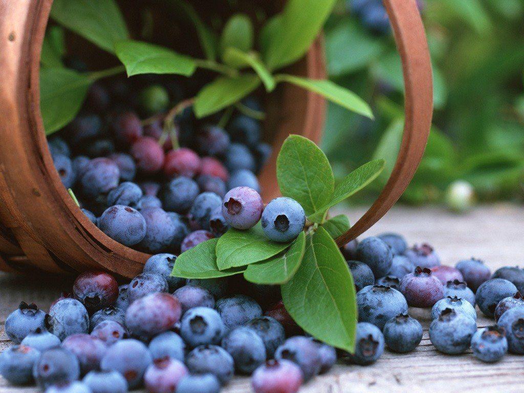 Los principales beneficios del arándano azul para la salud