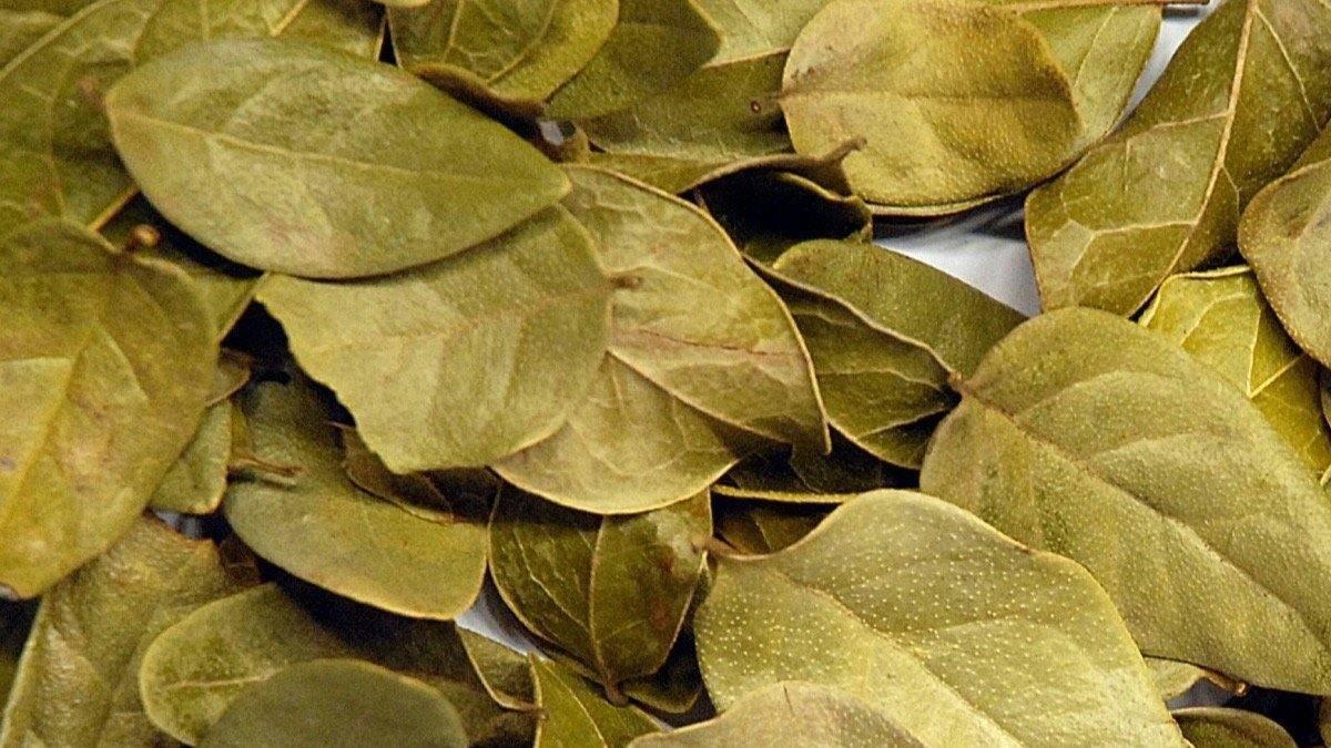 Beneficios de la acacia para adelgazar