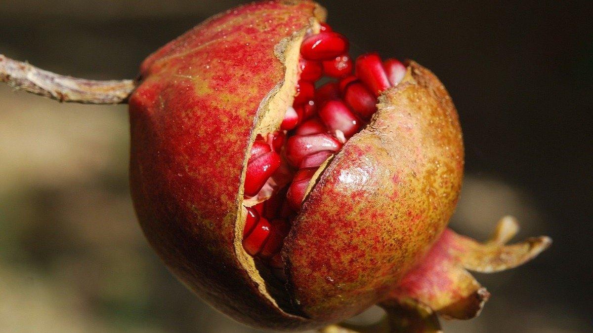 beneficios y propiedades curativas de la granada