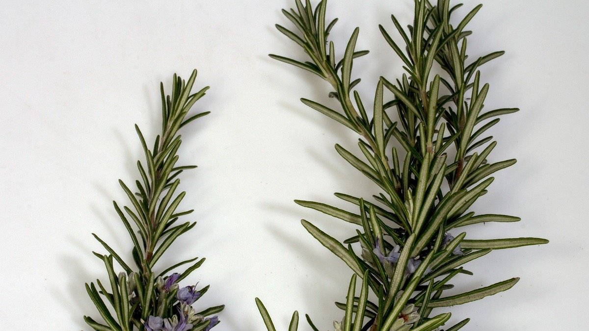 medicina para mal olor de axilas