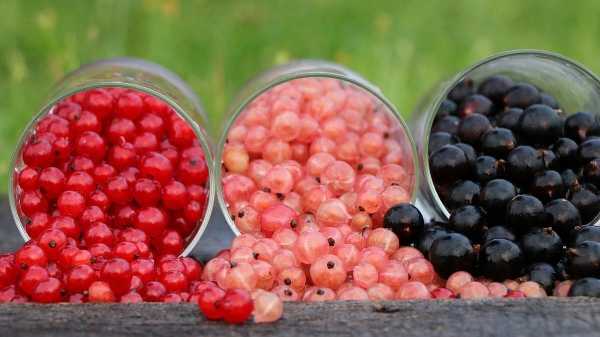 Propiedades de las grosellas y beneficios para la salud