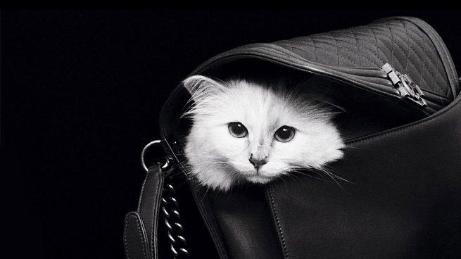 Karl Lagerfeld Choupette