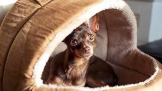 Conoce la estancia canina Pet's Butler
