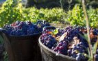 vinos de Madrid rutas enoturismo