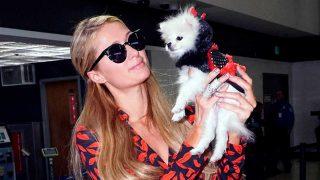 Paris Hilton es otra aficionada en llevar a sus perros a la última / Gtres