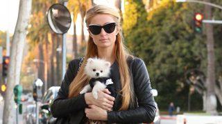 La empresaria Paris Hilton con una de sus mascotas. / Gtres