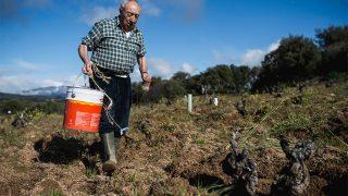 Robus trabajando el viñedo en Aumesquet / Gtres