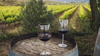 GALERÍA: De bodegas y vinos por Aranjuez y Chinchón / Gtres