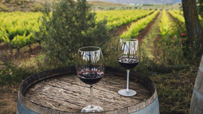viñedo y copas de vino