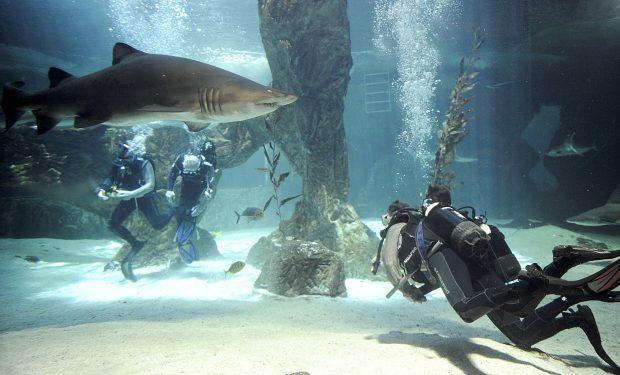 #PlanesLook | Una noche mágica en el Zoo Aquarium de Madrid