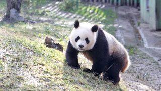Un panda en el zoo / Gtres