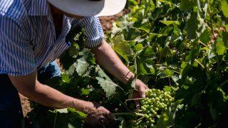 GALERÍA: En ruta con los vinos de Madrid / Gtres