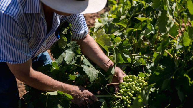 Bodegas Andrés Morate Vinos de Madrid