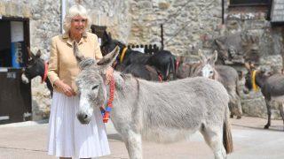Camilla Parker con el burro / Gtres