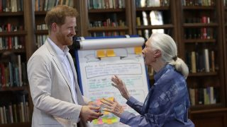 Harry y Jane Goodall / Gtres