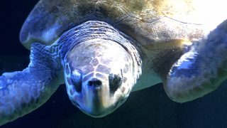 Una tortuga en el Zoo / Look