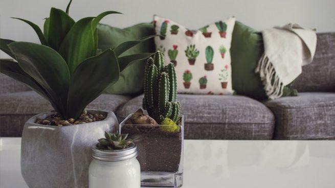 Estos son los motivos de por qué debes incluir cactus en tu decoración