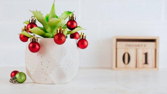Más allá de la Flor de Pascua, estas son las mejores plantas para decorar la casa en Navidad